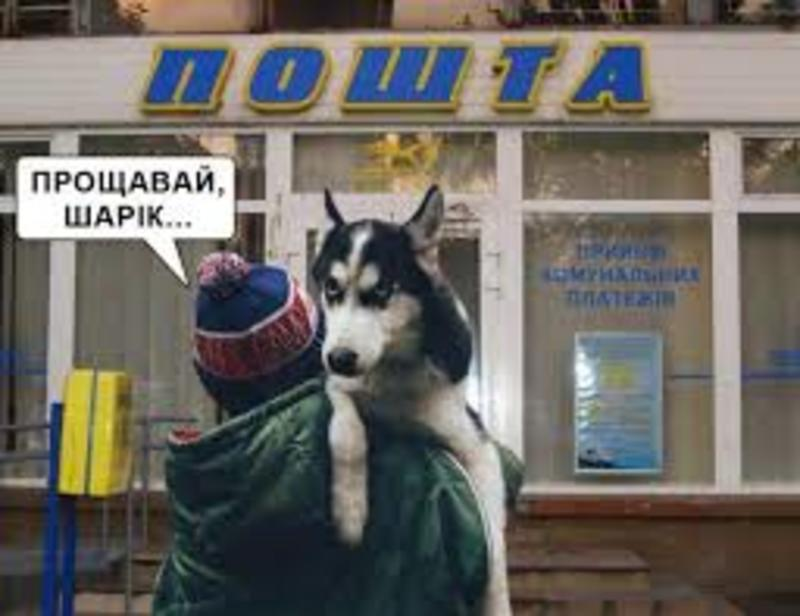 Продай собаку - заплати за газ: реакція соцмереж та подробиці скандальної поради нардепа