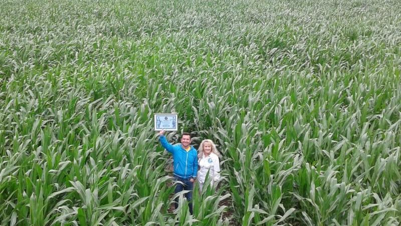 У Києві висадили кукурудзу у формі карти України (фото)