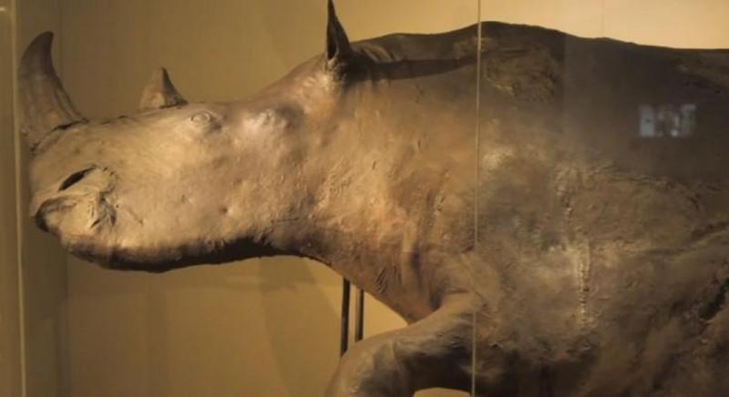 На Вінниччині виявили кістки гігантської доісторичної тварини