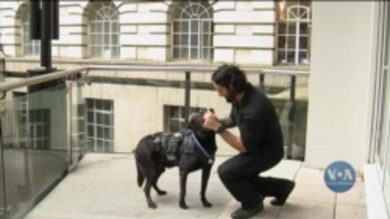 Пес, який врятував родину Обами, отримав державну нагороду – відео