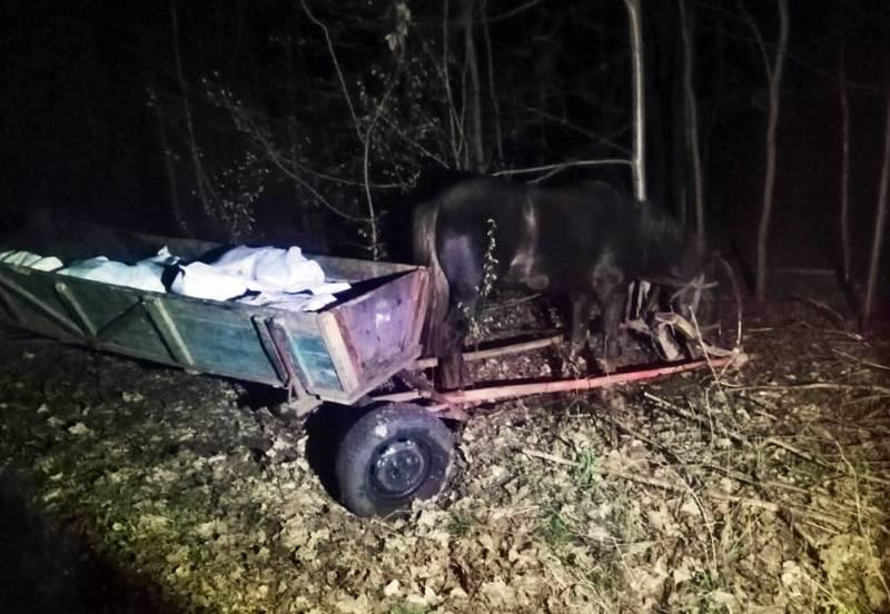 Троє українців намагались провезти до Білорусі 800 кг сала кіньми