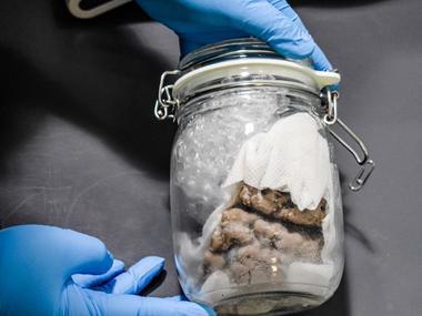 На кордоні США та Канади в авто знайшли людський мозок у банці