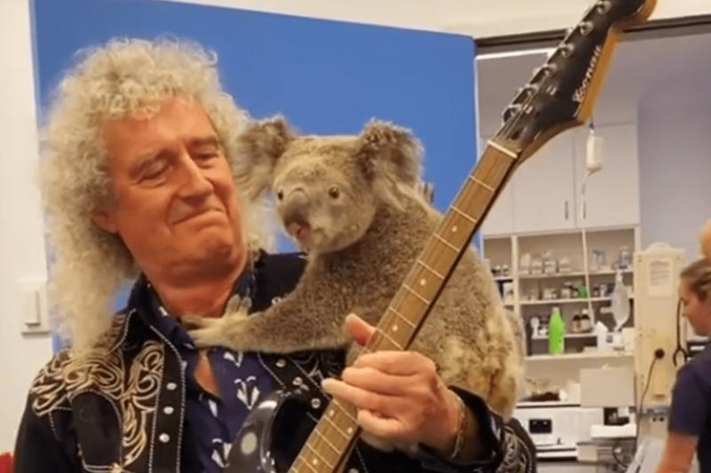 Гітарист Queen влаштував концерт для коали, яку врятували від пожеж в Австралії. Відео
