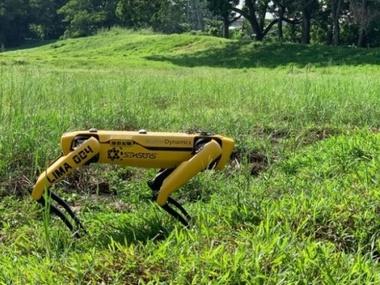 У Сінгапурі робот-собака стежитиме за соціальною дистанцією