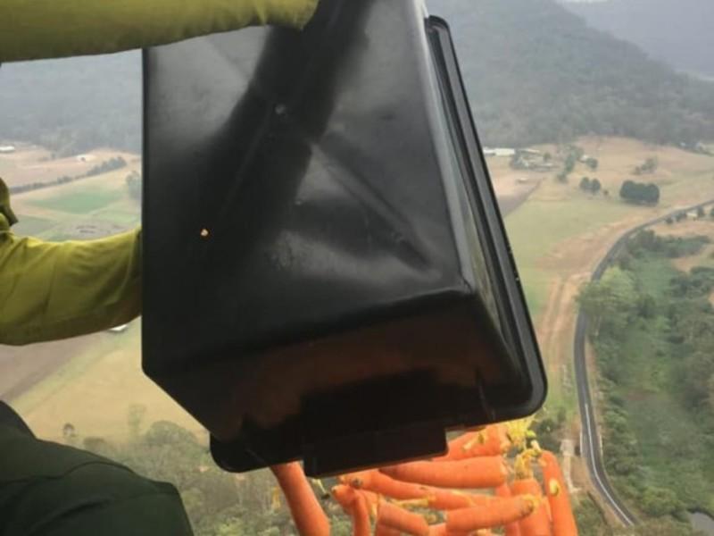 В Австралії з вертольоту скинули тисячі кілограмів овочів для тварин постраждалих від пожеж