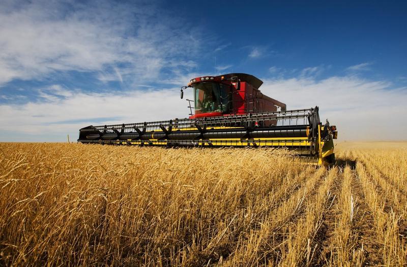 Україна збере другий рекордний за обсягом врожай у новітній історії