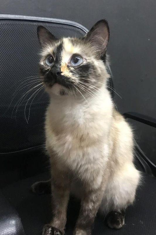 У Колумбії кішка врятувала однорічного малюка. Відео