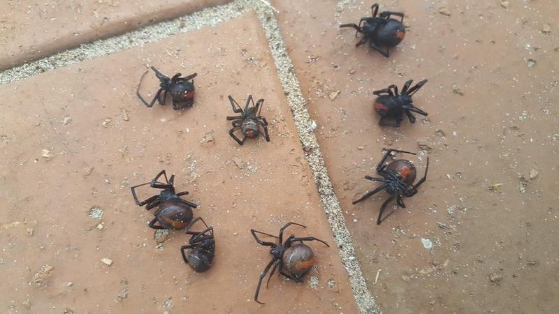 Жителька Австралії попередила про смертельну небезпеку