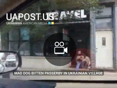 Mad dog bitten passerby in Ukrainian Village